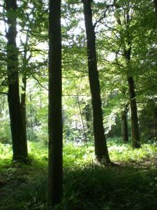 Carnieres-bois-des-vallées