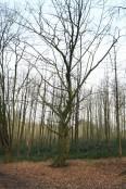 Bois de Mariemont Arbres