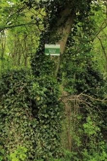 Sentiers-de-la-haute-Haine-3727
