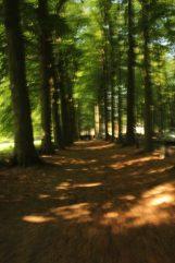 Dreve de Mariemont